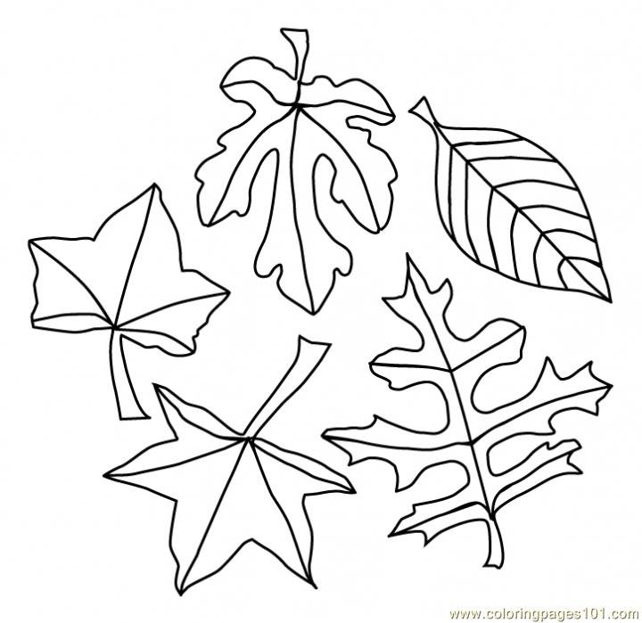 coloring pictures leaves leaves coloring page free autumn coloring pages pictures leaves coloring