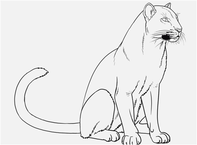 coloring pictures of panthers black panther marvel coloring pages coloring home panthers pictures of coloring