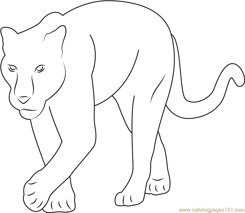 coloring pictures of panthers panther coloring pages at getdrawings free download panthers of pictures coloring