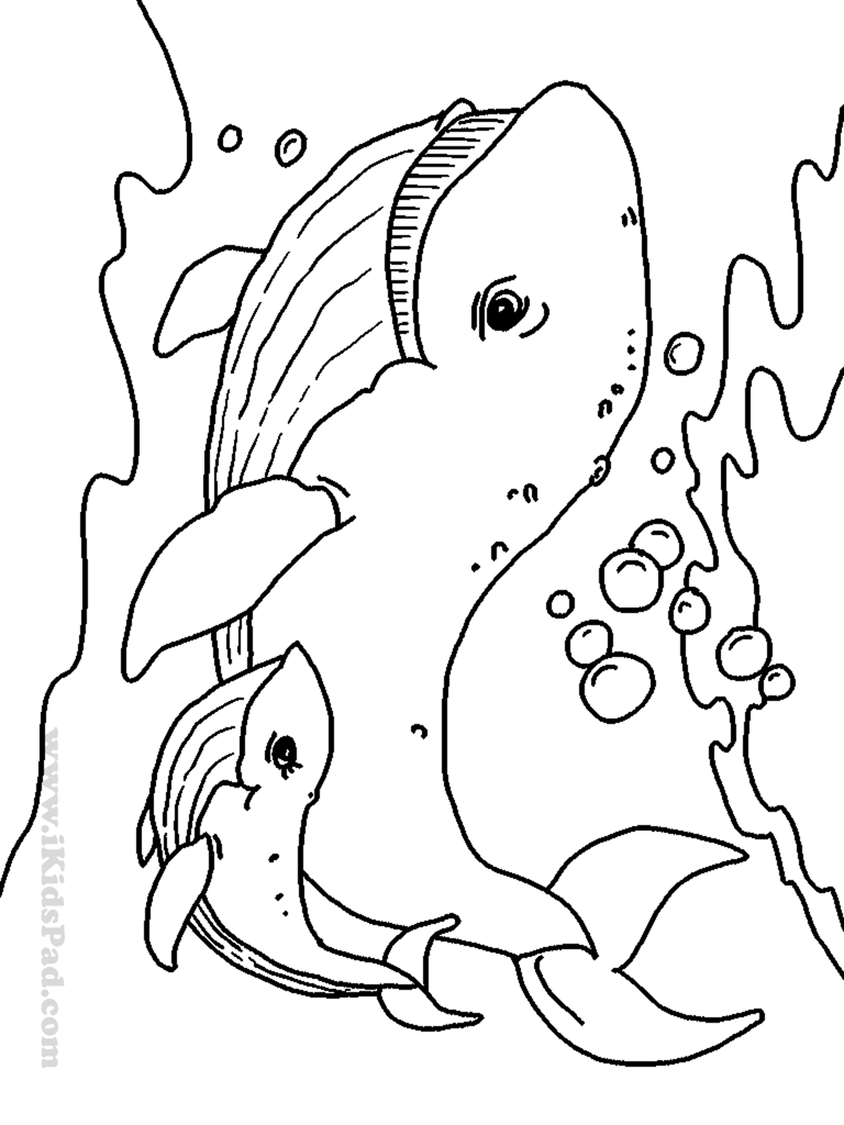 coloring pictures of sea animals free printable coloring pages baby animals coloring home sea pictures animals coloring of