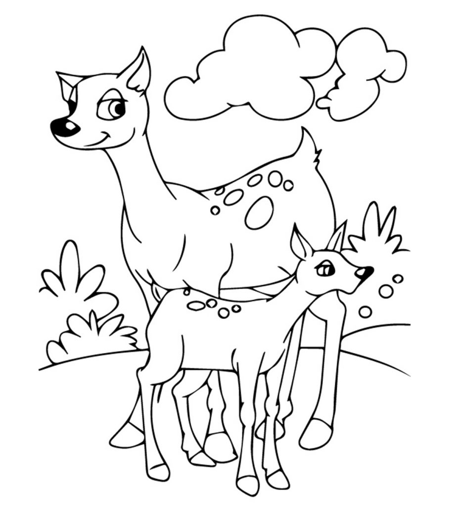 coloring printable pet animals top 25 free printable coloring pages of animals online printable pet coloring animals