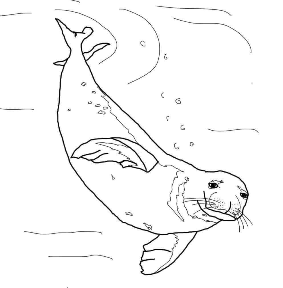 coloring seal free seal coloring page coloring seal