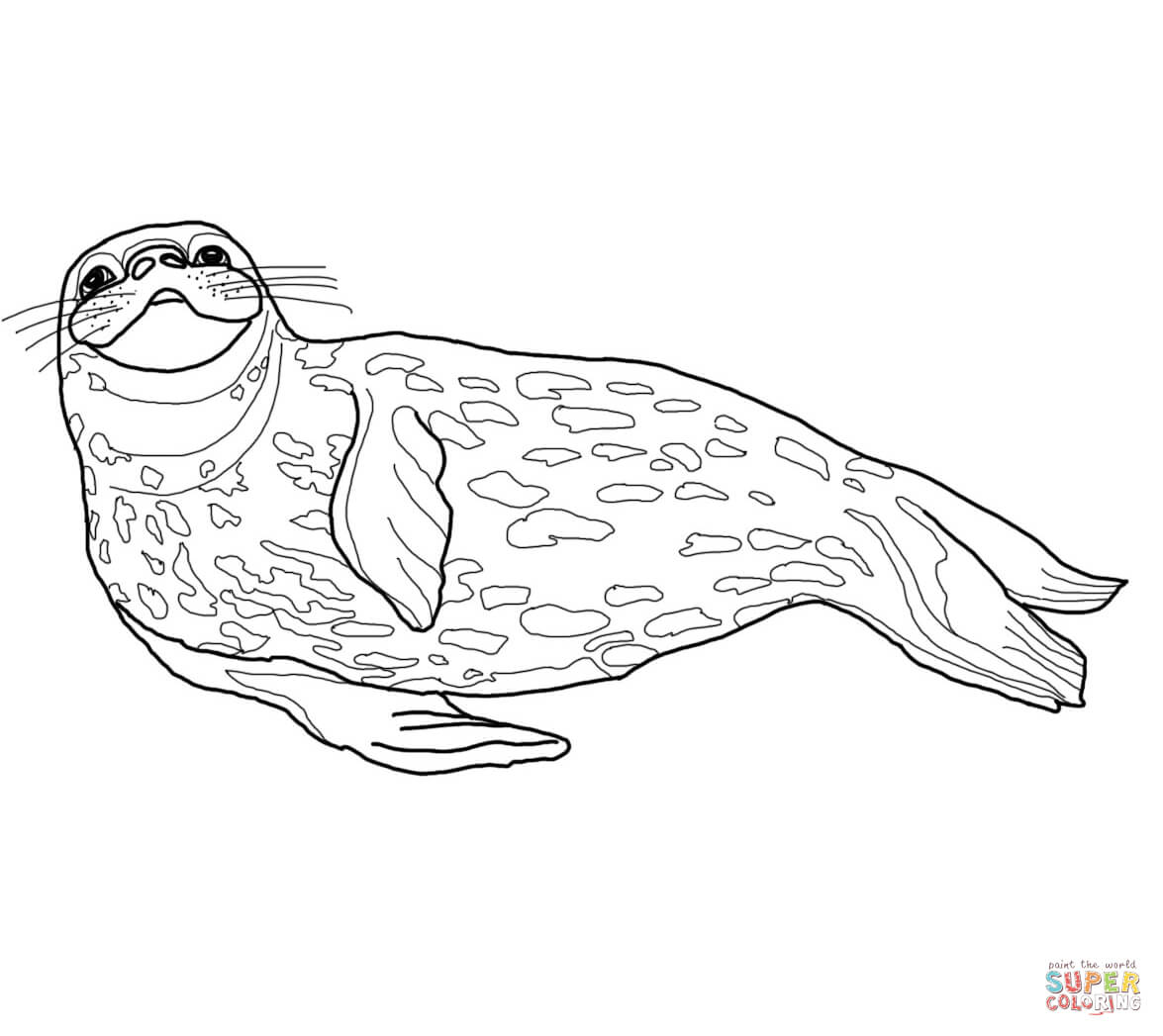 coloring seal free seal coloring pages seal coloring