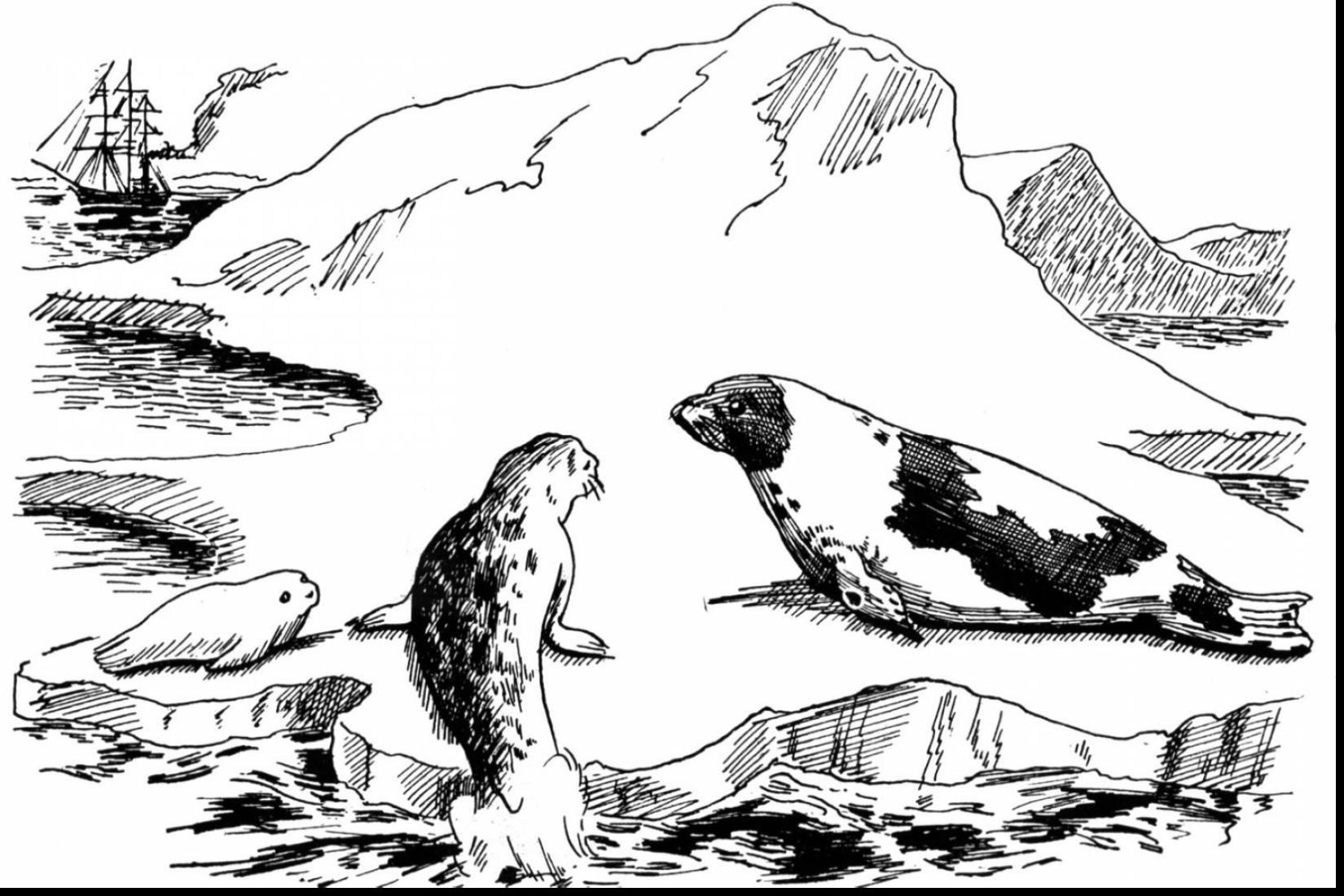 coloring seal free seal coloring pages seal coloring 1 2