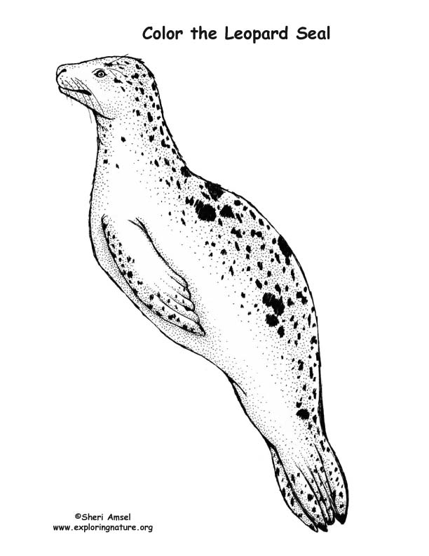 coloring seal great seal of the united states coloring page coloring home coloring seal