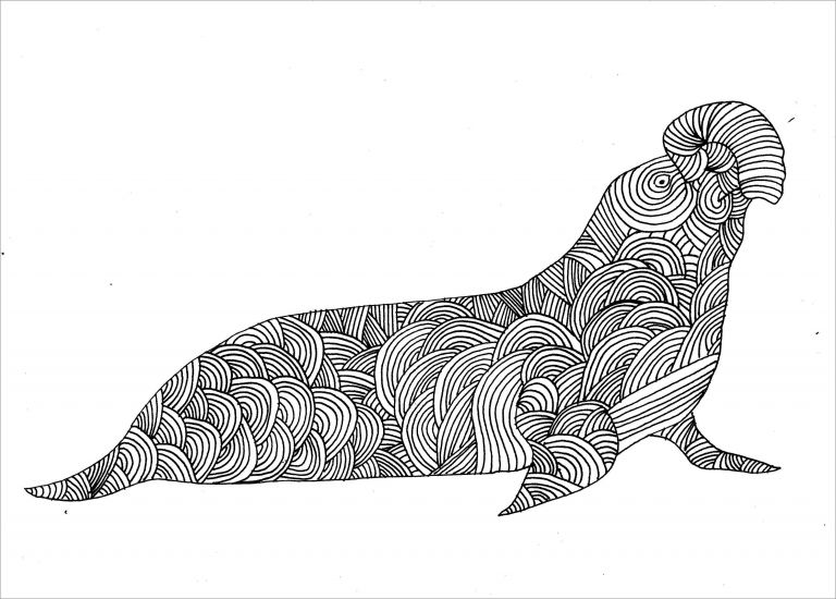 coloring seal harbor seal coloring page cswd seal coloring