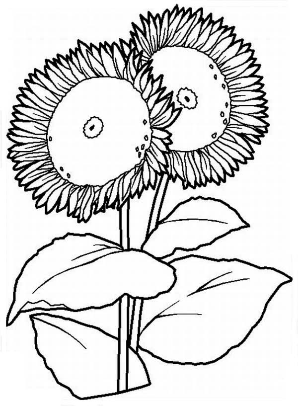 coloring sheet 4 coloring page two big sunflower coloring page download print online sheet coloring 4 coloring page