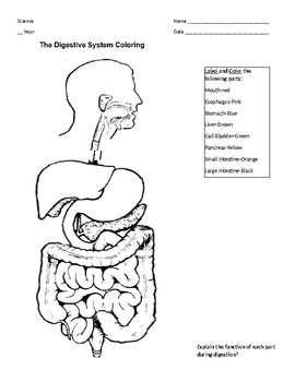 coloring sheet digestive system coloring page coloring pages of digestive system coloring home digestive sheet page coloring system coloring