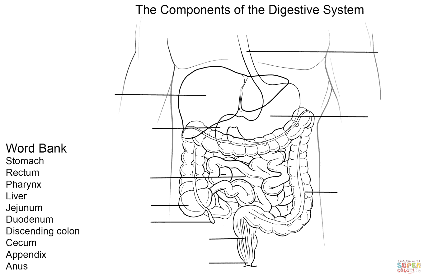 coloring sheet digestive system coloring page digestion system coloring activity by michele rinn tpt coloring digestive sheet system page coloring