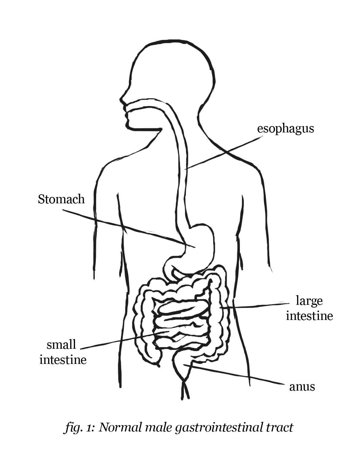 coloring sheet digestive system coloring page digestive system coloring page coloring home coloring system page coloring digestive sheet