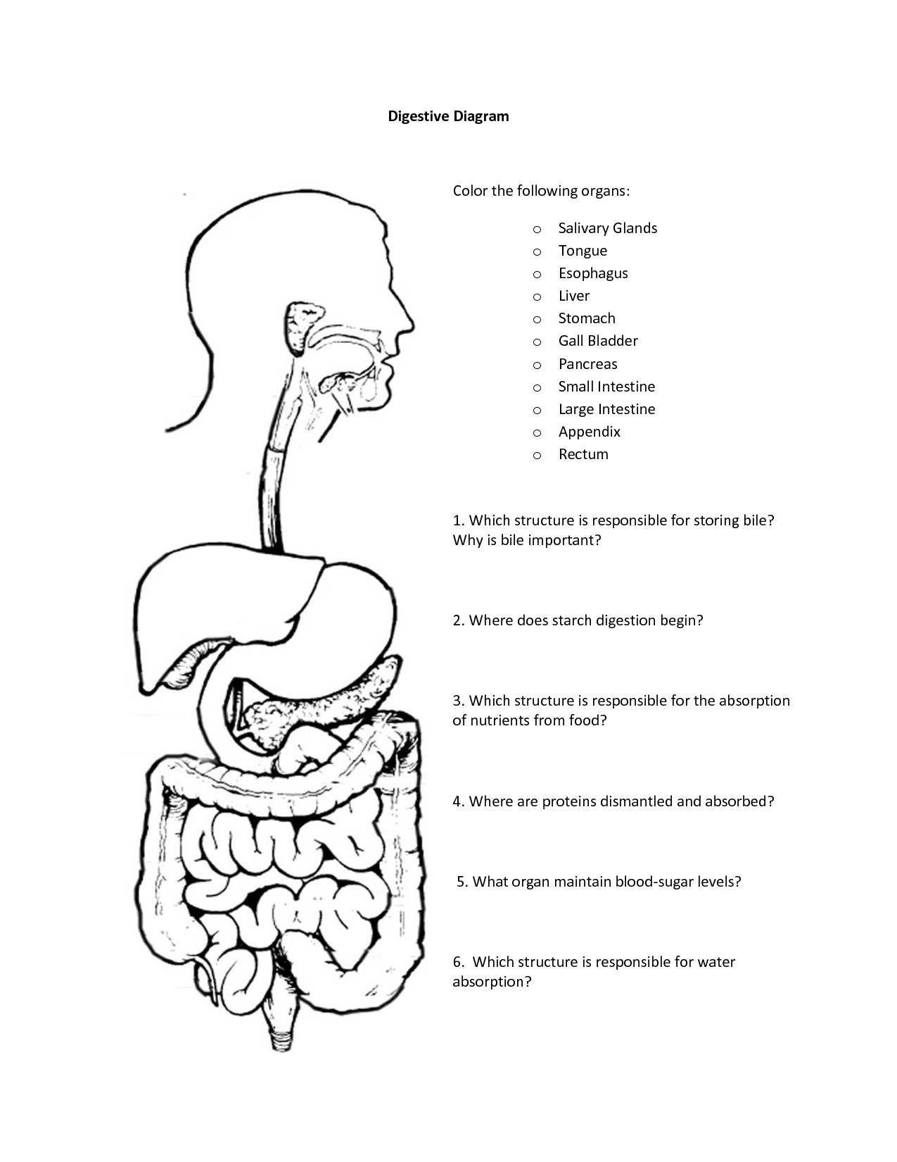coloring sheet digestive system coloring page digestive system coloring pages food ideas digestive coloring system coloring page sheet digestive