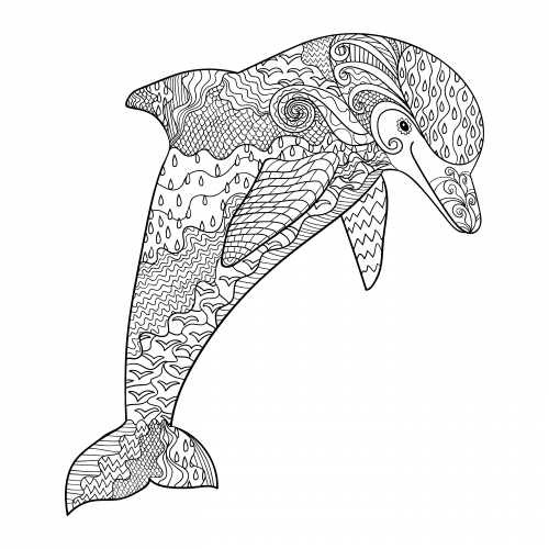 coloring sheet dolphin bottlenose dolphin coloring page at getdrawings free coloring sheet dolphin