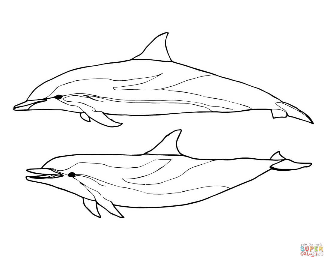 coloring sheet dolphin dolphin coloring pages coloring sheet dolphin