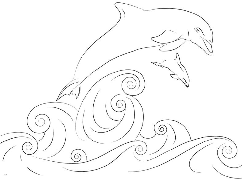 coloring sheet dolphin dolphin coloring pages sheet dolphin coloring