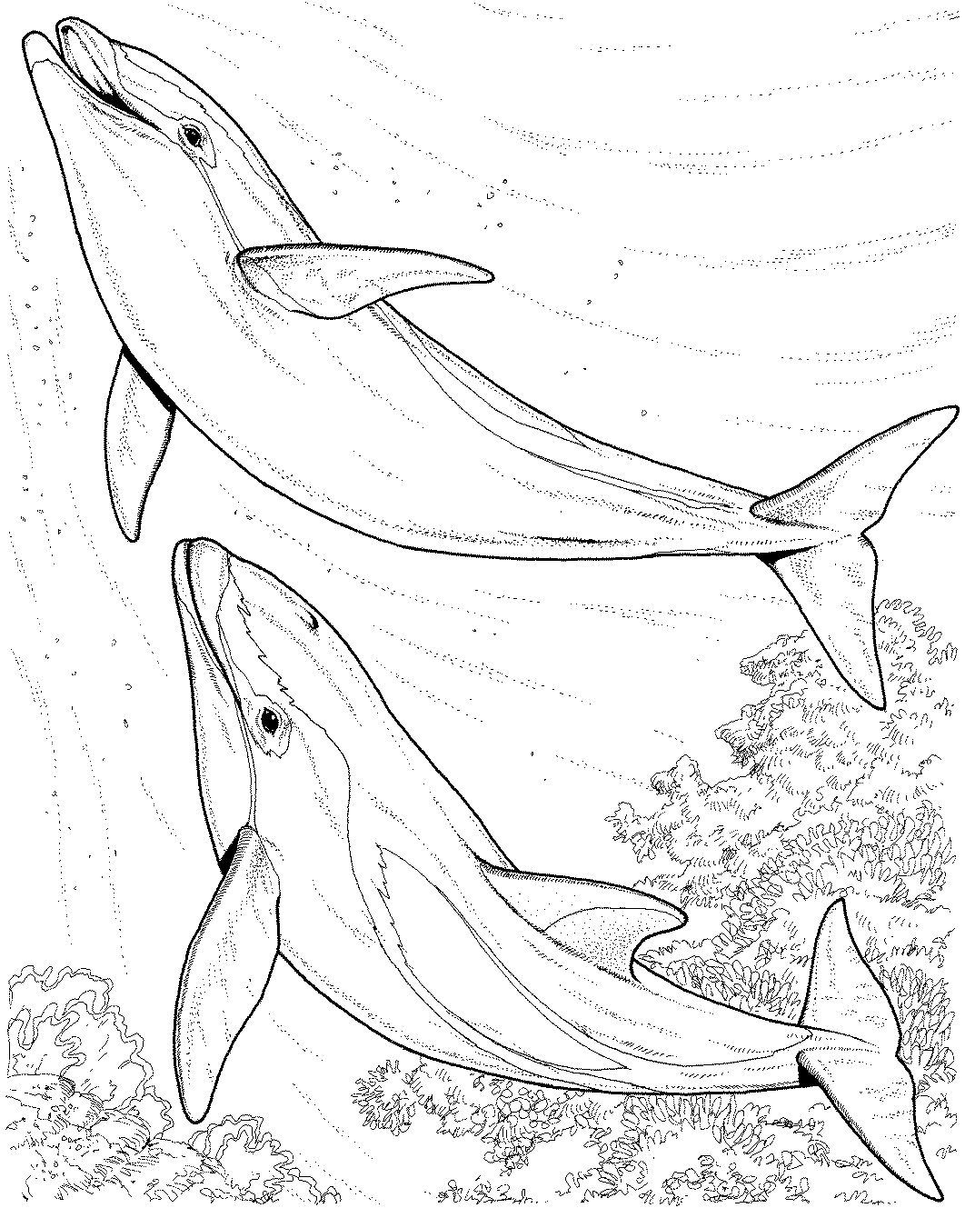 coloring sheet dolphin realistic dolphin drawing at getdrawings free download coloring sheet dolphin