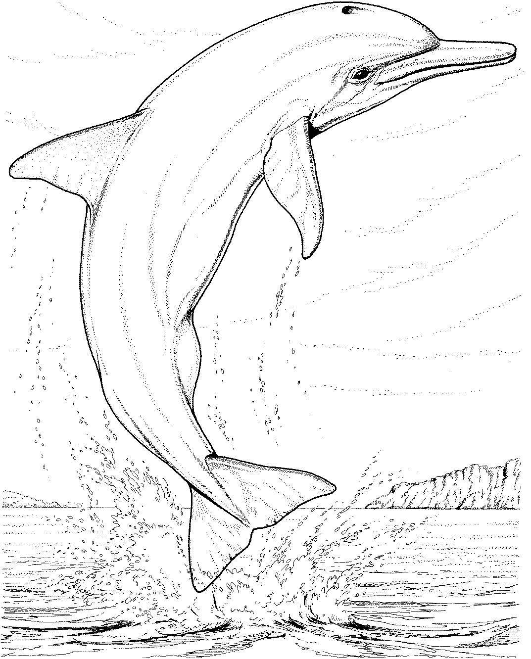 coloring sheet dolphin spinner dolphin drawing at getdrawings free download sheet coloring dolphin