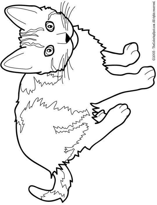 coloring sheet kitty real cat coloring pages at getcoloringscom free coloring sheet kitty 1 1