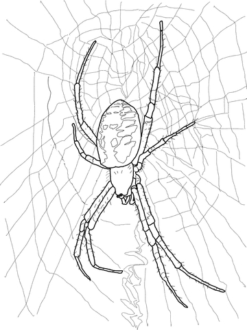 coloring sheet spider coloring pages scary spider coloring pages coloring home pages sheet spider coloring coloring