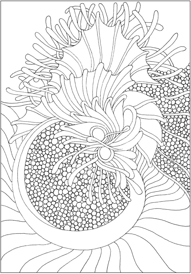 coloring with sample welcome to dover publications sample coloring with 1 1