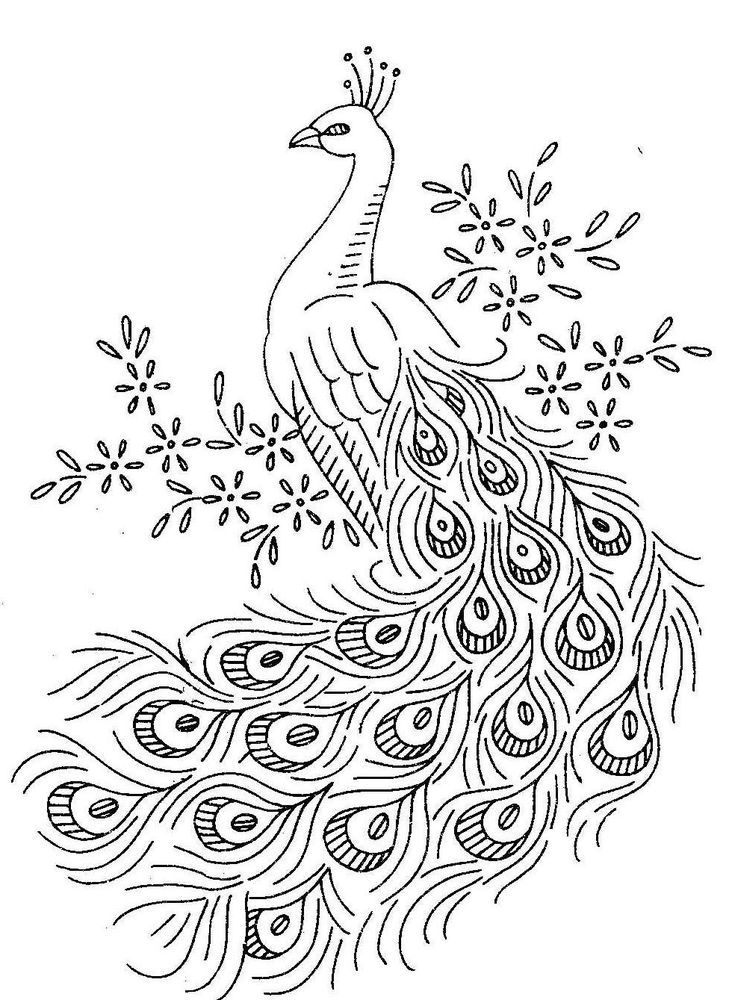colouring pictures of peacock peacocks to color for children peacocks kids coloring pages pictures colouring peacock of