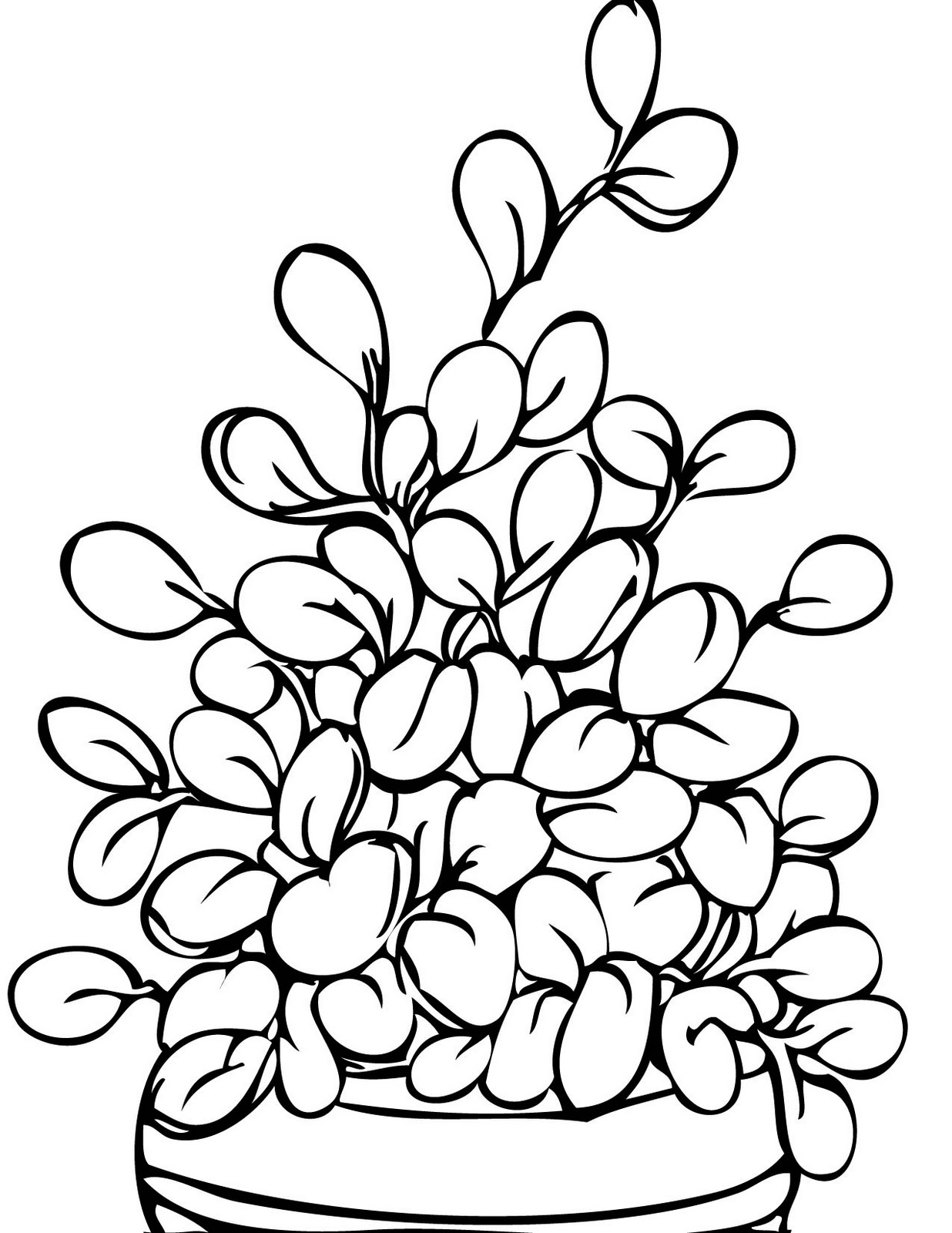 colouring pictures of plants potted plants coloring pages colouring plants pictures of