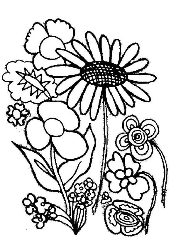 colouring pictures of plants various type of flower plants coloring page coloring sky plants pictures colouring of