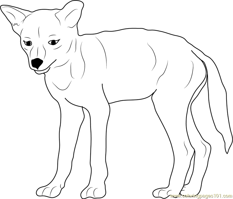 coyote coloring page coloring for kids coyote coloring page phoenix coyotes page coloring coyote