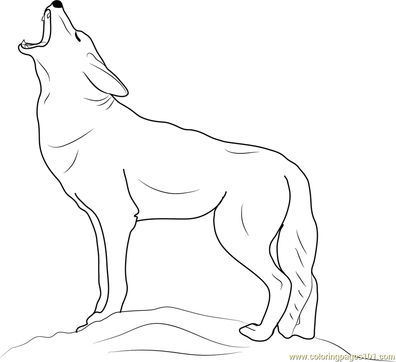 coyote coloring page coyote coloring download coyote coloring for free 2019 coyote page coloring