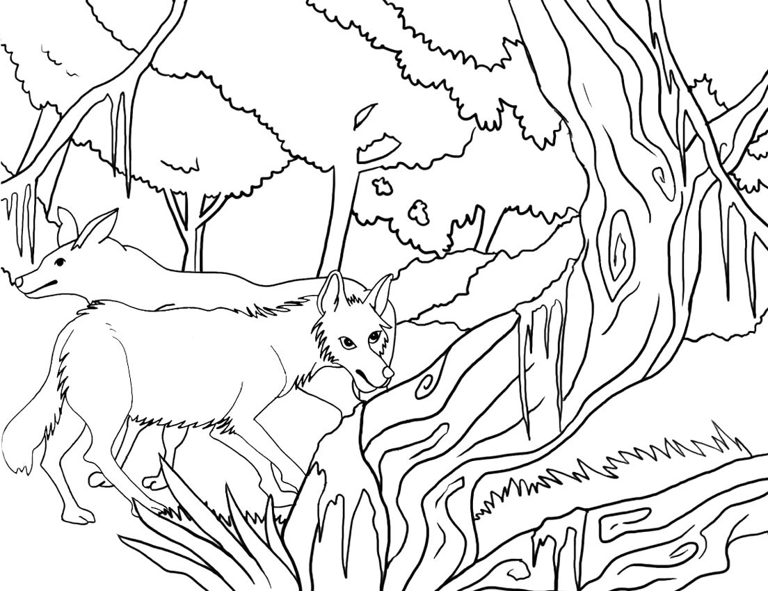 coyote coloring page coyote coloring pages coyote coloring page