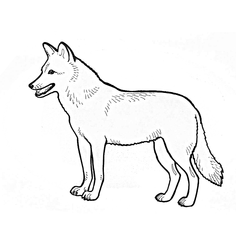 coyote coloring page coyote coloring pages to download and print for free coloring coyote page 1 1