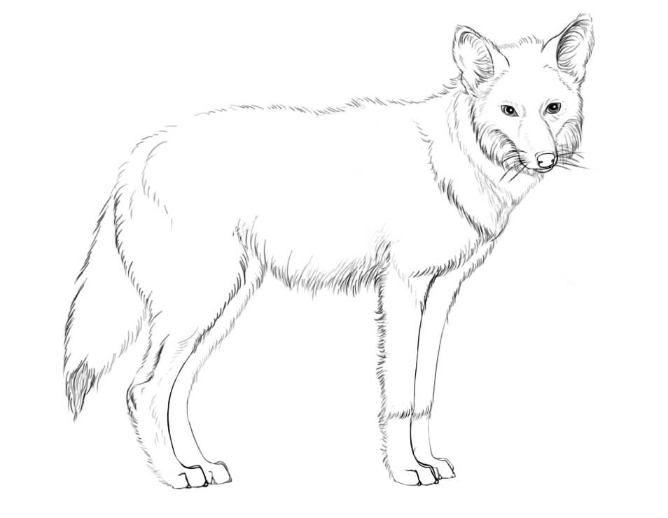 coyote coloring page coyote coloring pages to download and print for free coloring page coyote 1 1