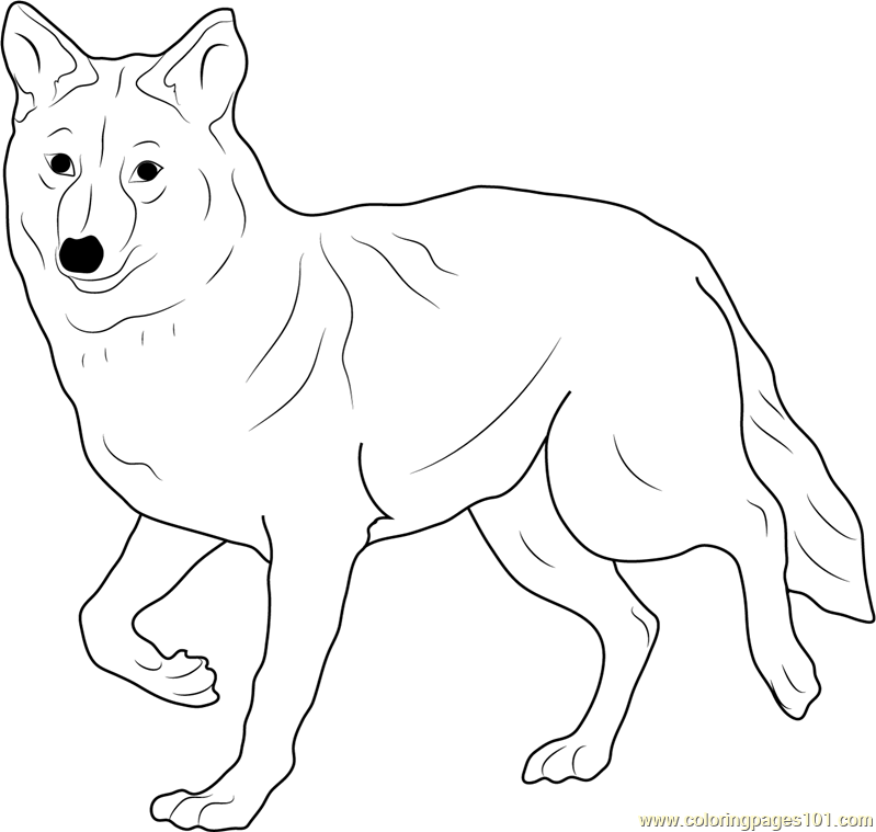 coyote coloring page coyote free coloring pages coyote coloring page