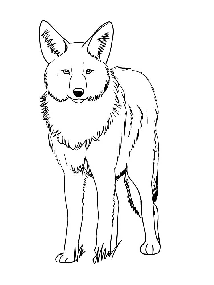 coyote coloring page coyote jackal coloring pages for kids preschool and coyote coloring page