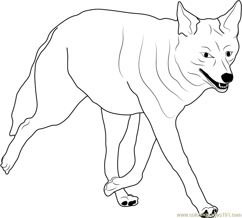 coyote coloring page coyote walking coloring page free coyote coloring pages coyote coloring page