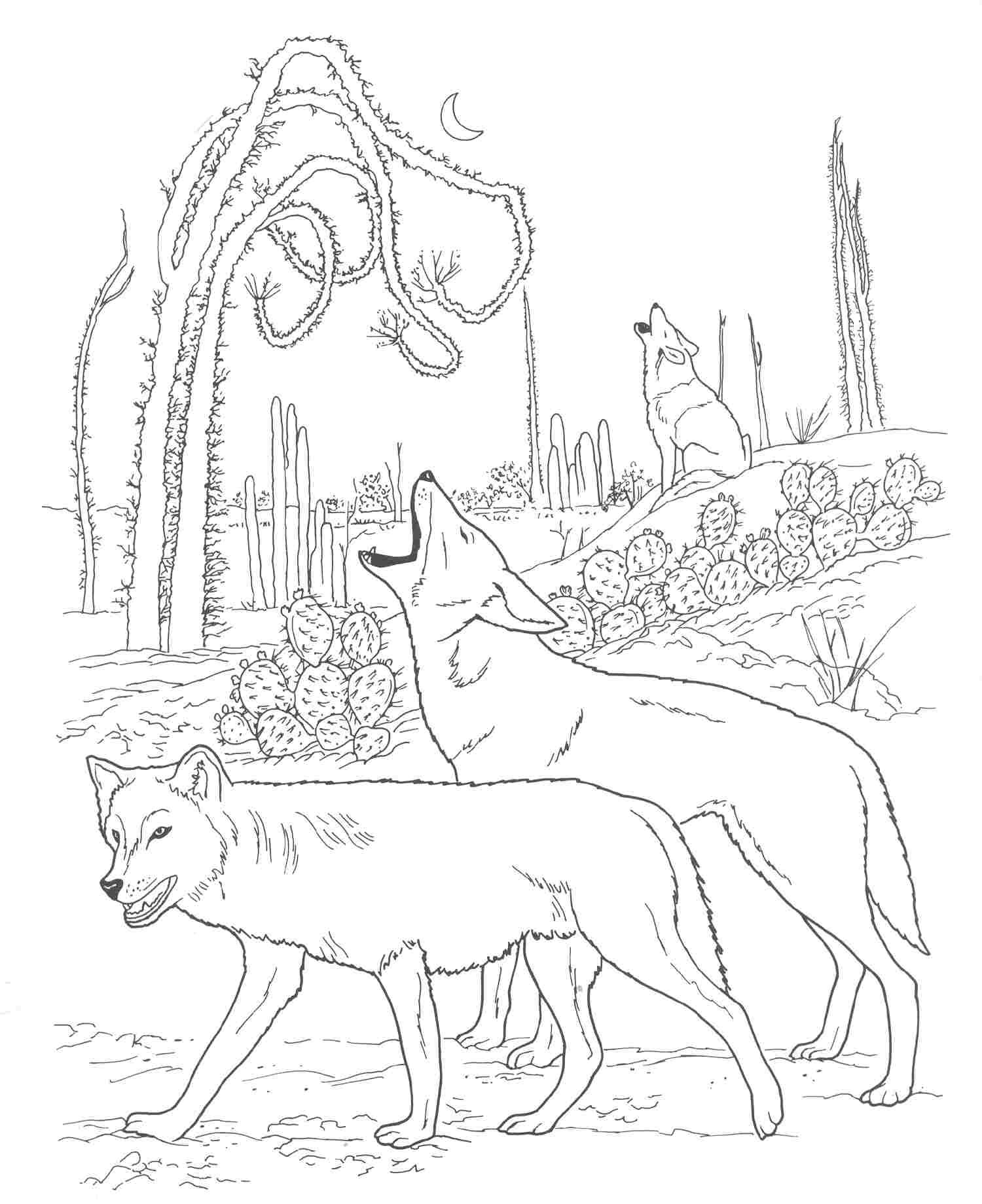 coyote coloring page free coyote coloring page coyote coloring page