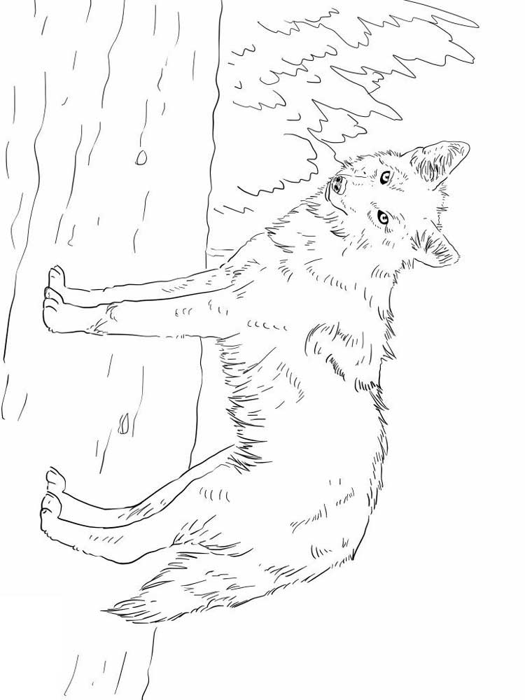 coyote coloring page free coyote coloring pages download and print coyote coloring page coyote