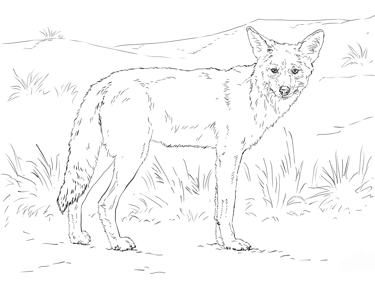 coyote coloring page free coyote coloring pages download and print coyote page coloring coyote