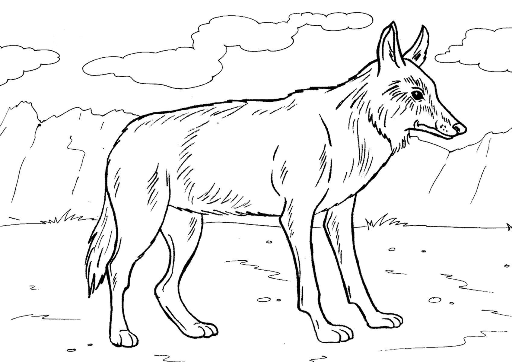 coyote coloring page free printable coyote coloring pages for kids coyote page coloring