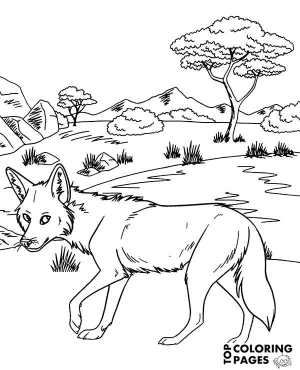 coyote coloring page high quality african coyote coloring page to print for free coyote page coloring