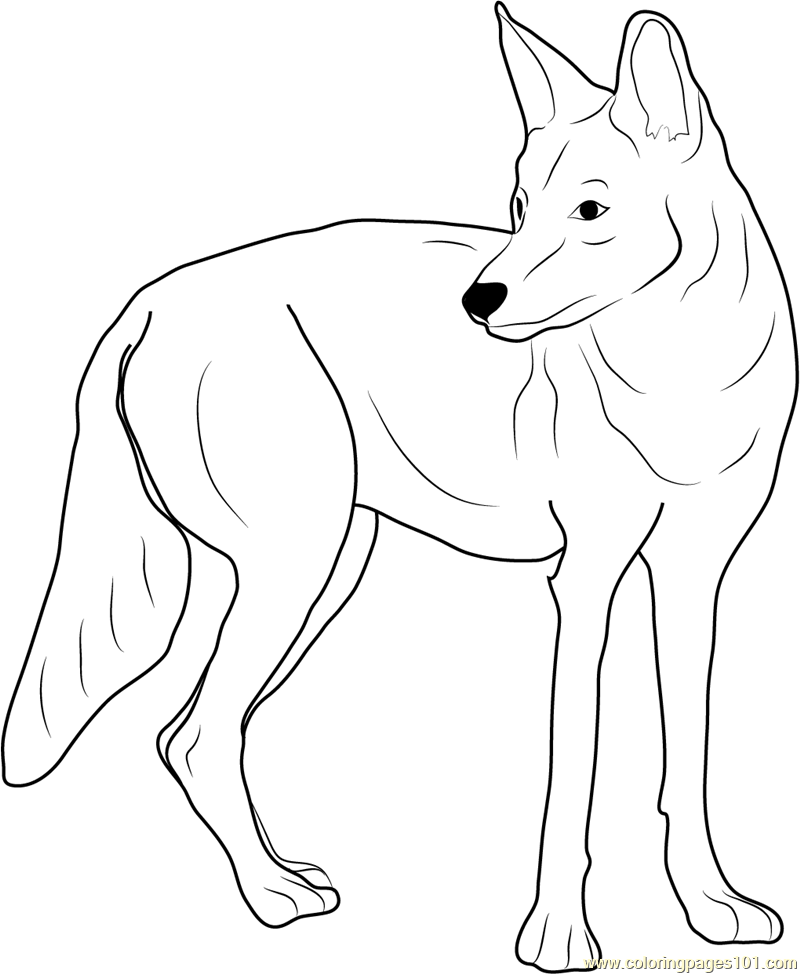 coyote coloring page western coyote coloring page free coyote coloring pages coyote page coloring
