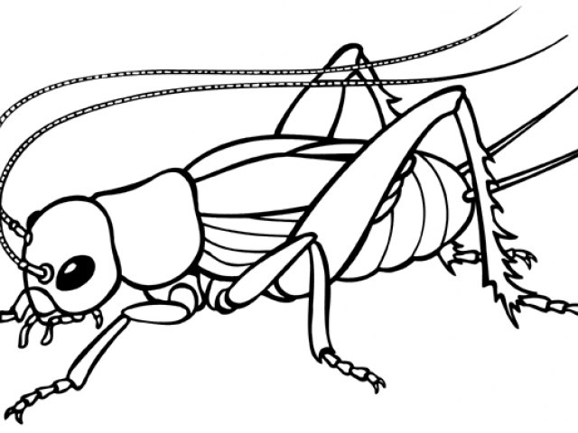cricket drawing cricket insect drawing free download on clipartmag cricket drawing