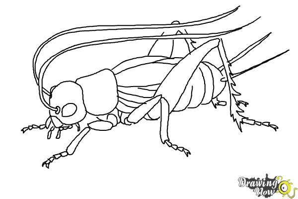 cricket drawing how to draw a cricket drawingnow drawing cricket