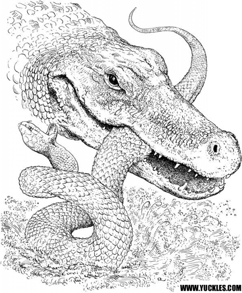 crocodile pictures to color alligator coloring pages cool2bkids to crocodile pictures color