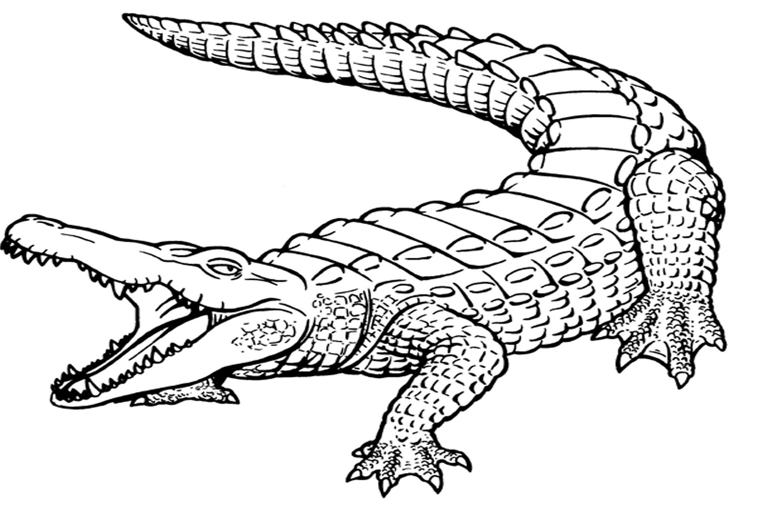crocodile pictures to color alligator coloring pages print and customize to crocodile color pictures