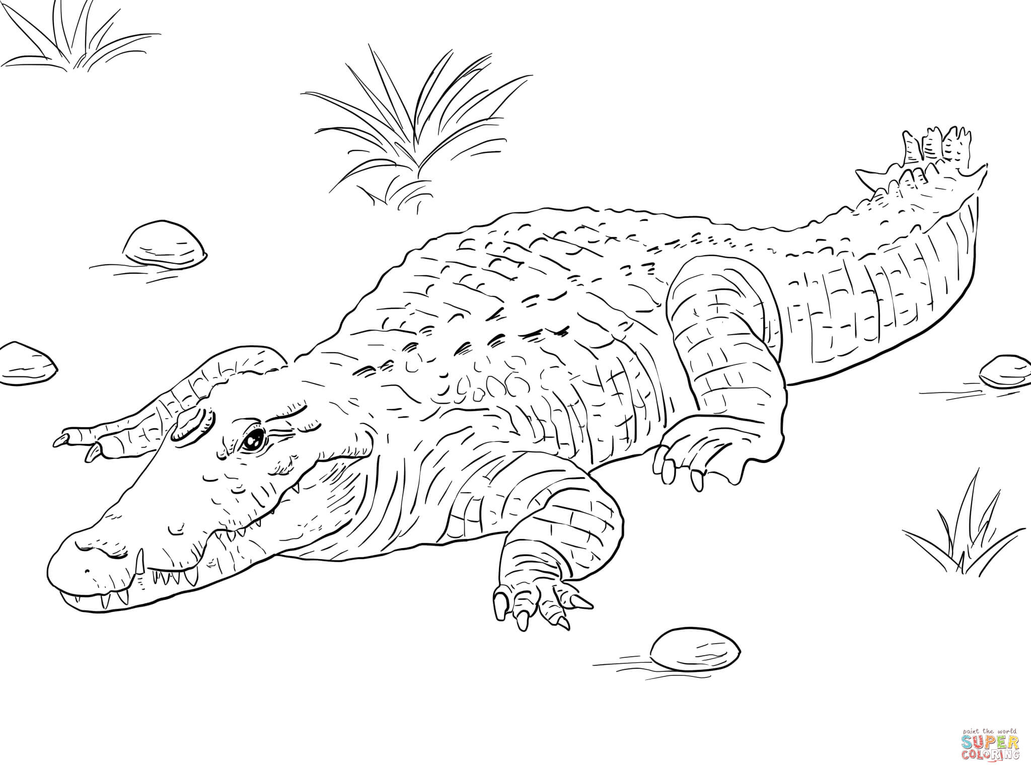 crocodile pictures to color coloring page vector the crocodile color to pictures crocodile