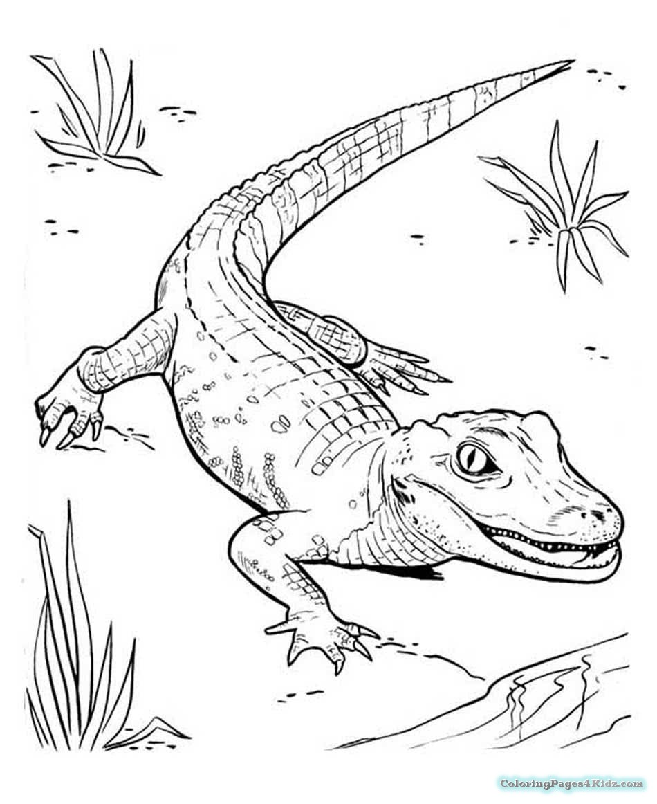 crocodile pictures to color crocodile drawing at getdrawings free download pictures to crocodile color