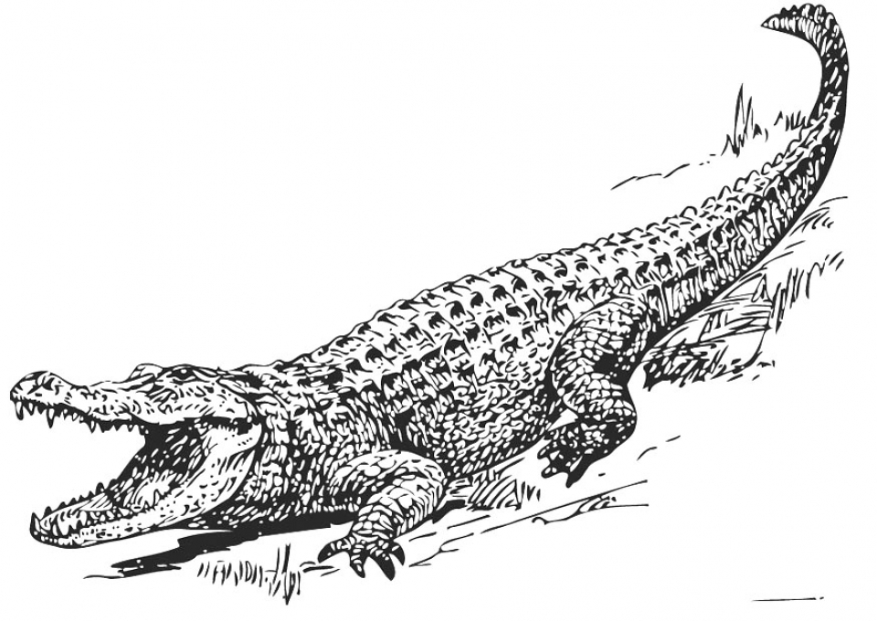crocodile pictures to color free printable crocodile coloring pages for kids to pictures color crocodile