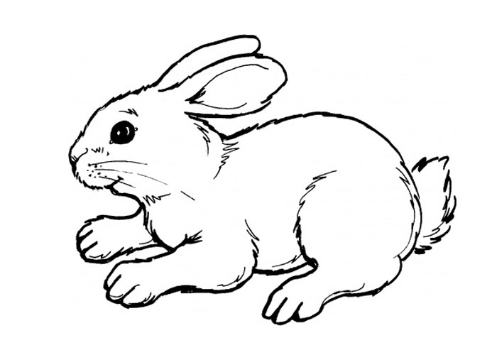 cute bunny coloring pages easter bunny coloring pages to print bunny coloring cute pages