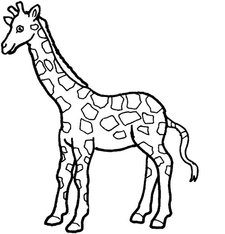 cute giraffe coloring pages giraffes drawing at getdrawings free download coloring giraffe pages cute