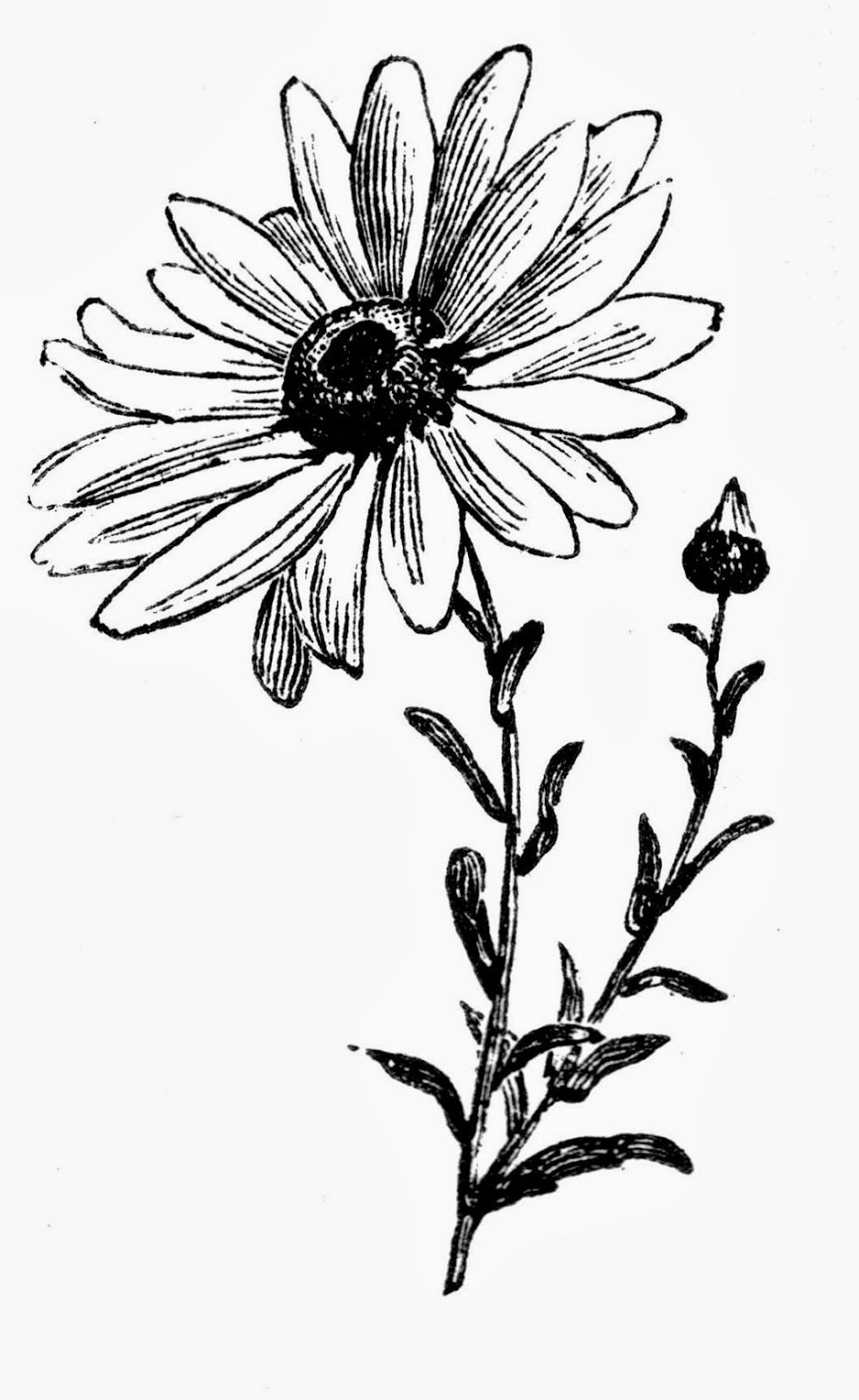 daisy flower cartoon pictures daisy drawing clipart best flower pictures cartoon daisy